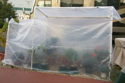 San Jose makeshift greenhouse